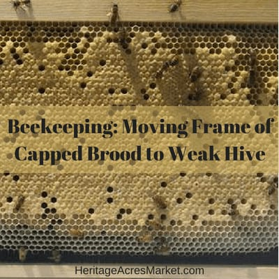 Beekeeping: Moving Frame(s) of Capped Brood to a Weak Hive