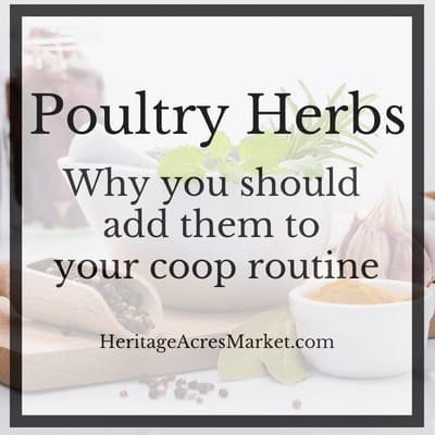 Adding Herbs To Your Chicken Coop
