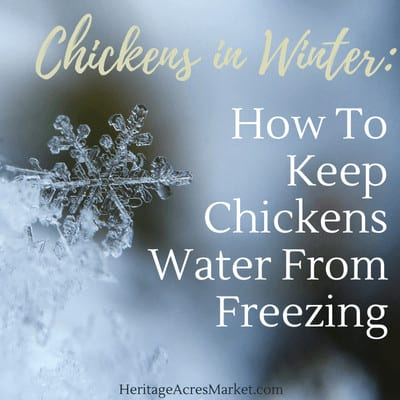How To Keep Chickens Water From Freezing