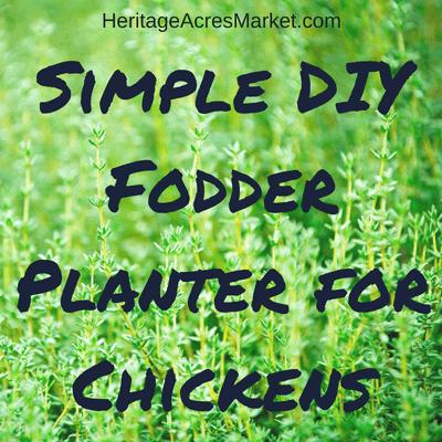 Simple DIY Fodder Planter for Chickens