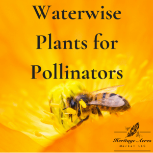 Waterwise Plants for Pollinators 1