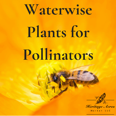 Waterwise Plants for Pollinators