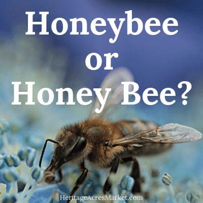 Honeybee or Honey Bee?