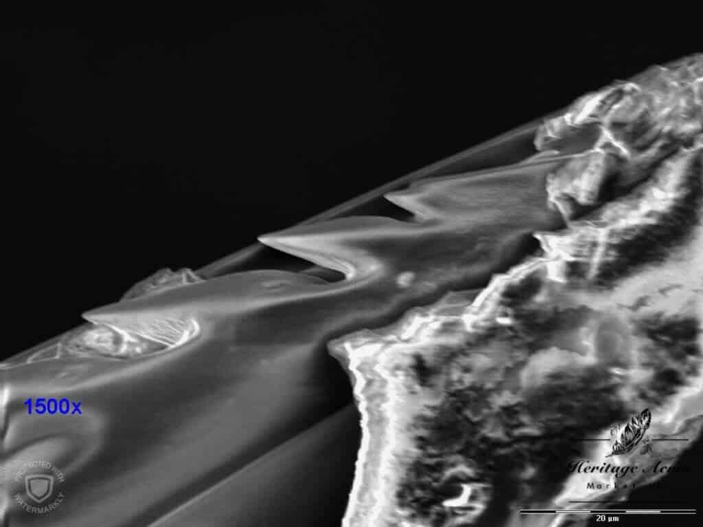 Honey Bee Stinger Barbs 1500x magnification