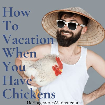 How To Vacation When You Have Chickens 1