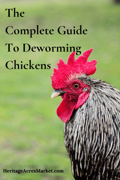 How To Deworm Chickens