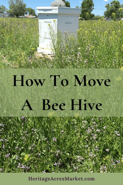 Moving Bee Hives