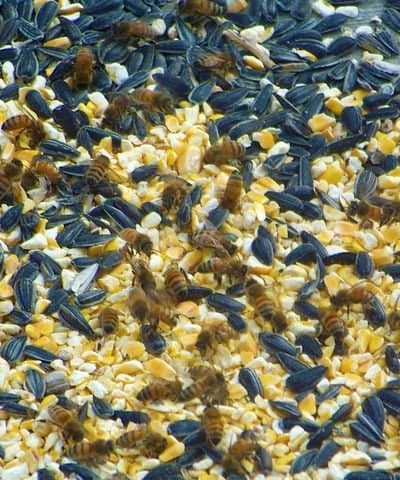 honey bees in chicken food