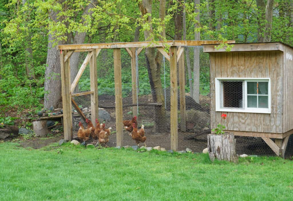 Brown wooden chicken coop with chickens