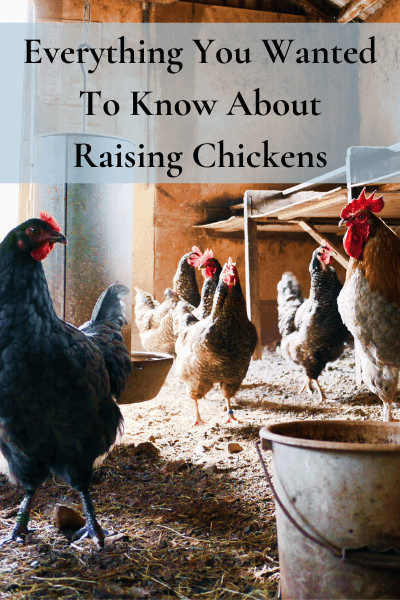 Everything You Wanted To Know About Raising Chickens