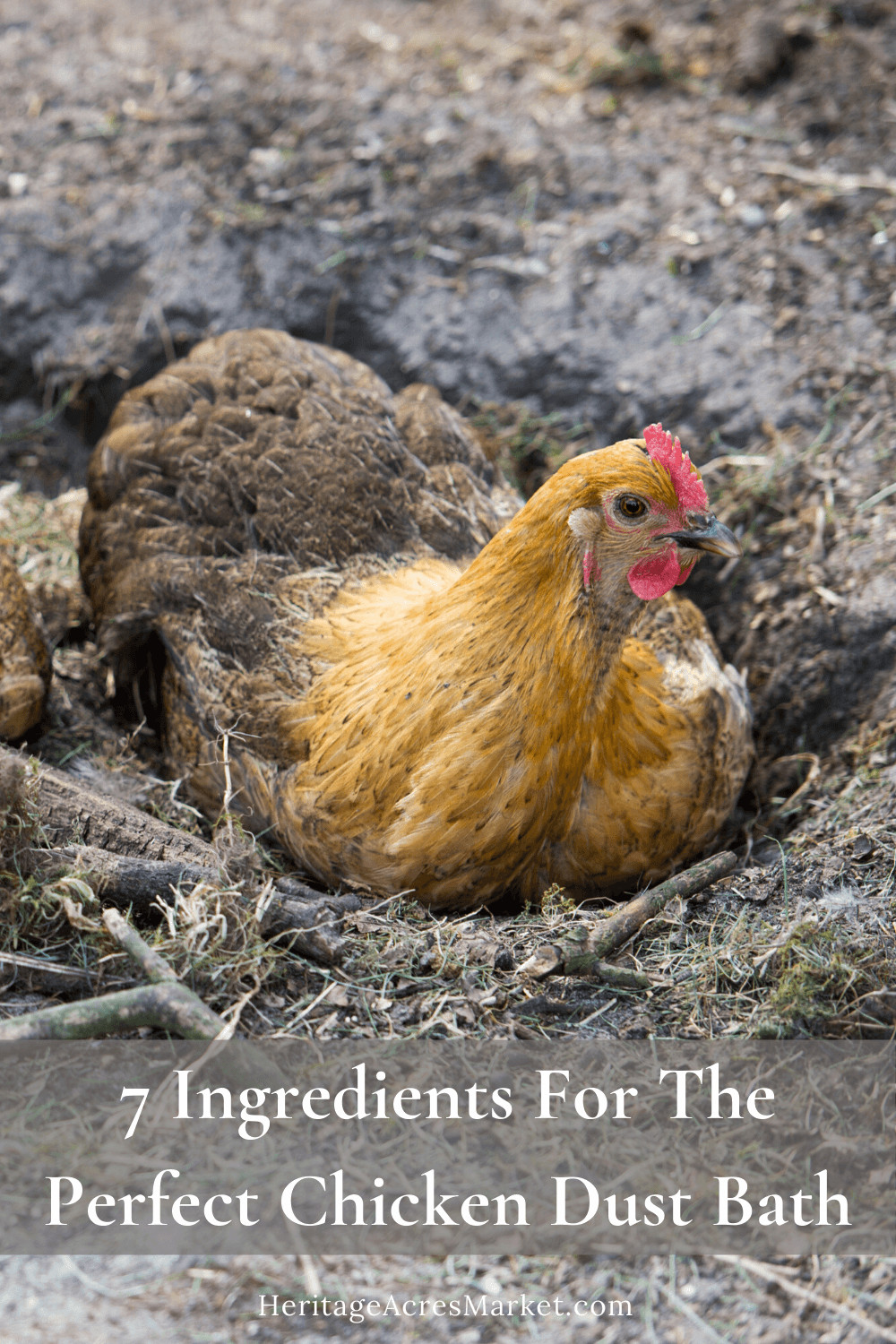 7 Ingredients For The Perfect Chicken Dust Bath