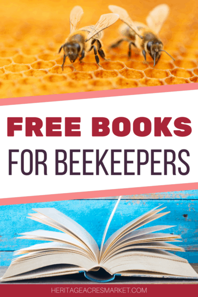 Honey bees on yellow comb and an open book
