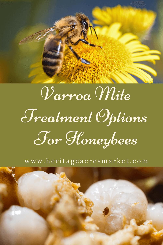 Varroa Mite Treatment Options For Honey Bees ft Mark Dykes of Bee Squad