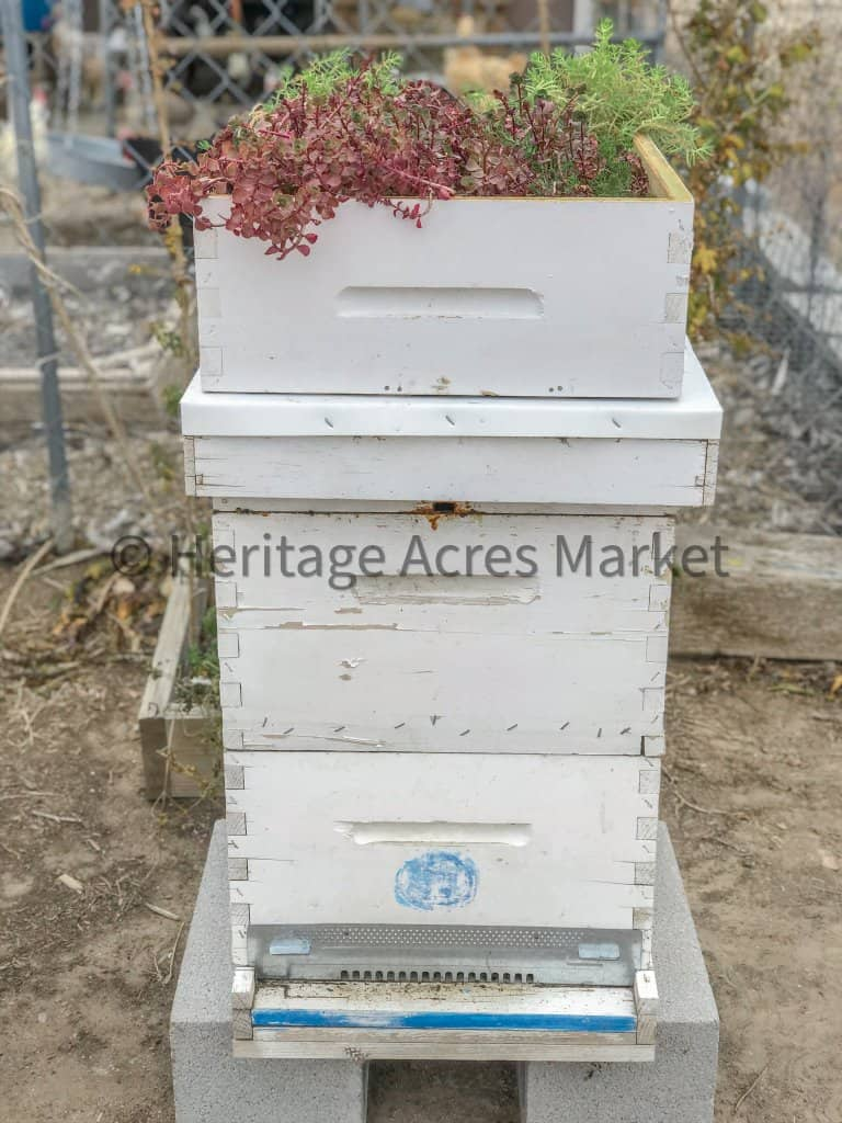 DIY Bee Hive Green Roof 14