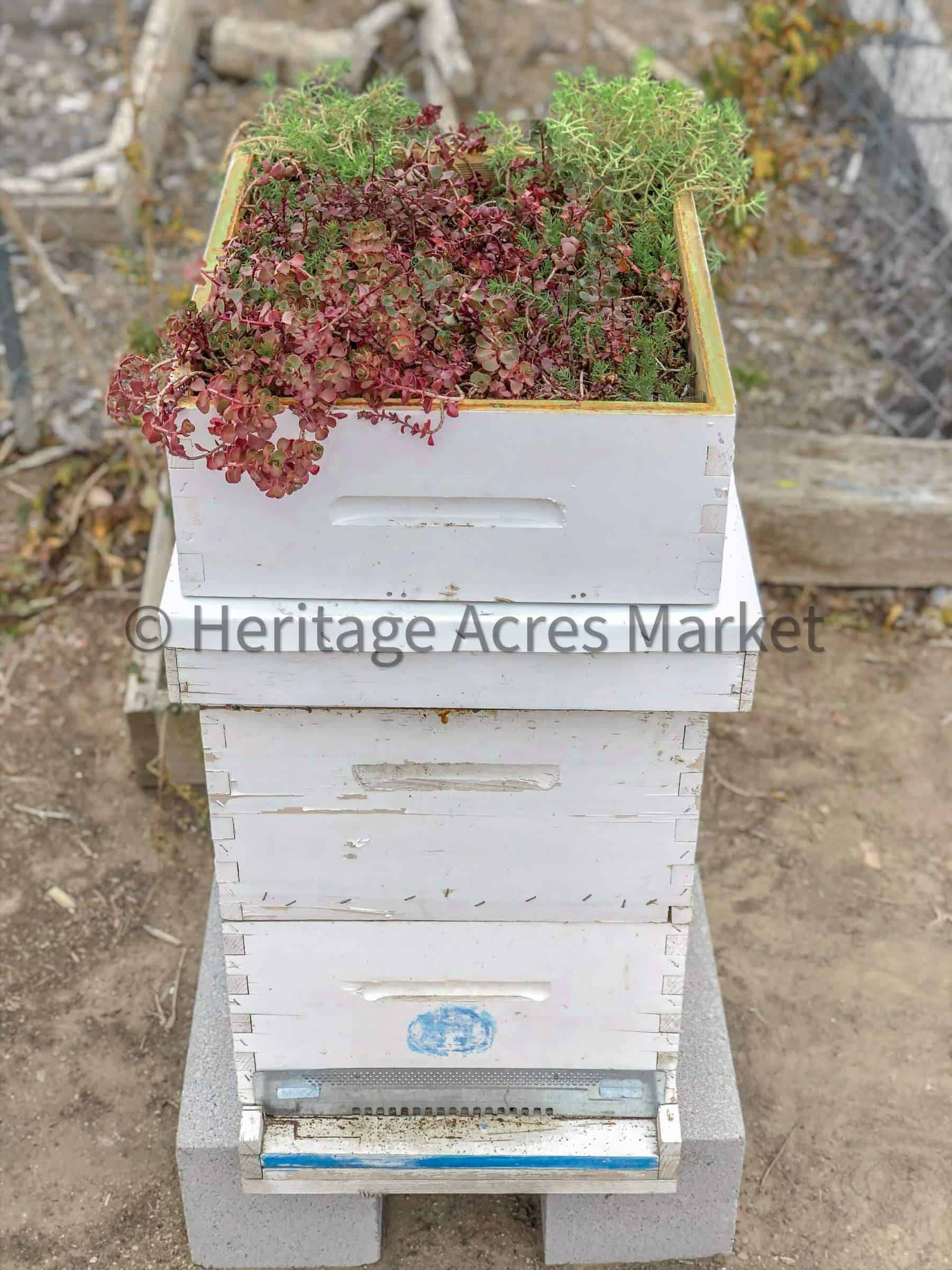 DIY Bee Hive Green Roof