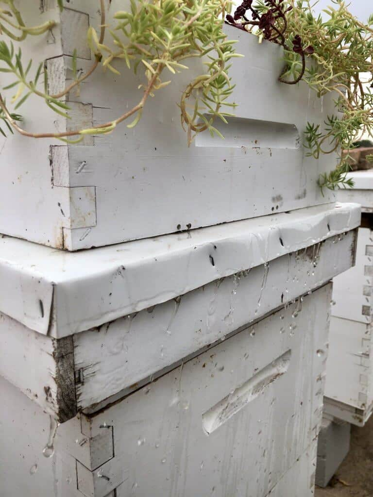 DIY Bee Hive Green Roof 13