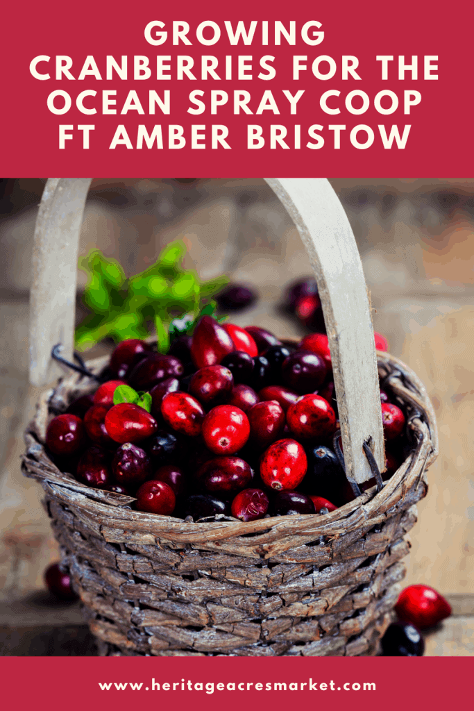 Wooden basket filled with cranberries