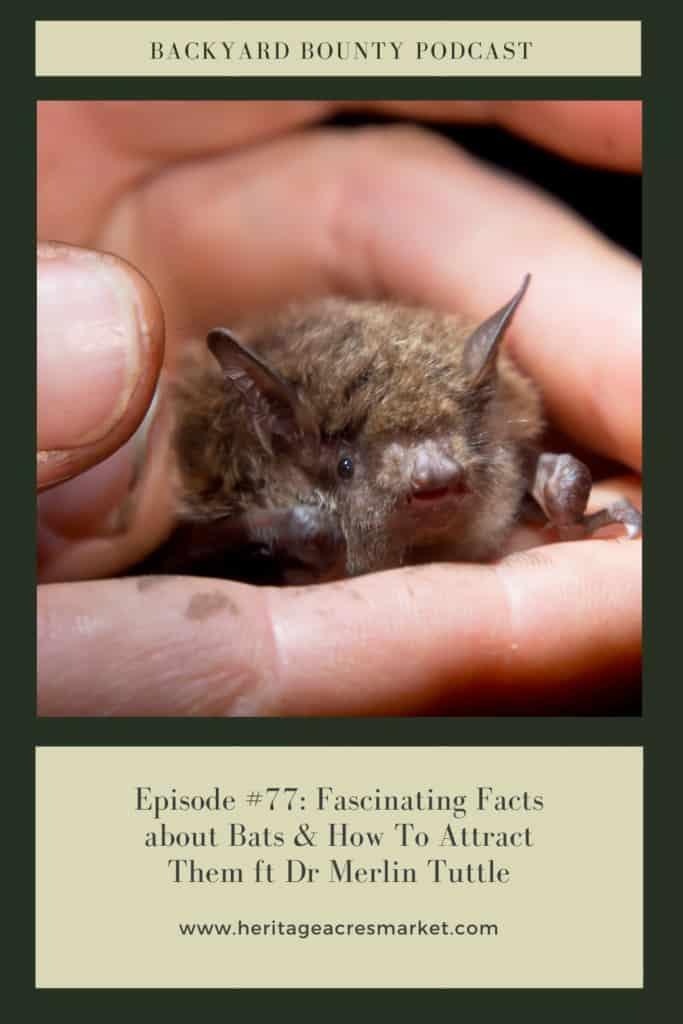 Bat held in hand