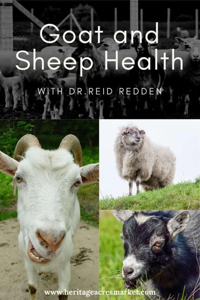 Goat and Sheep Health ft Dr. Reid Redden 1