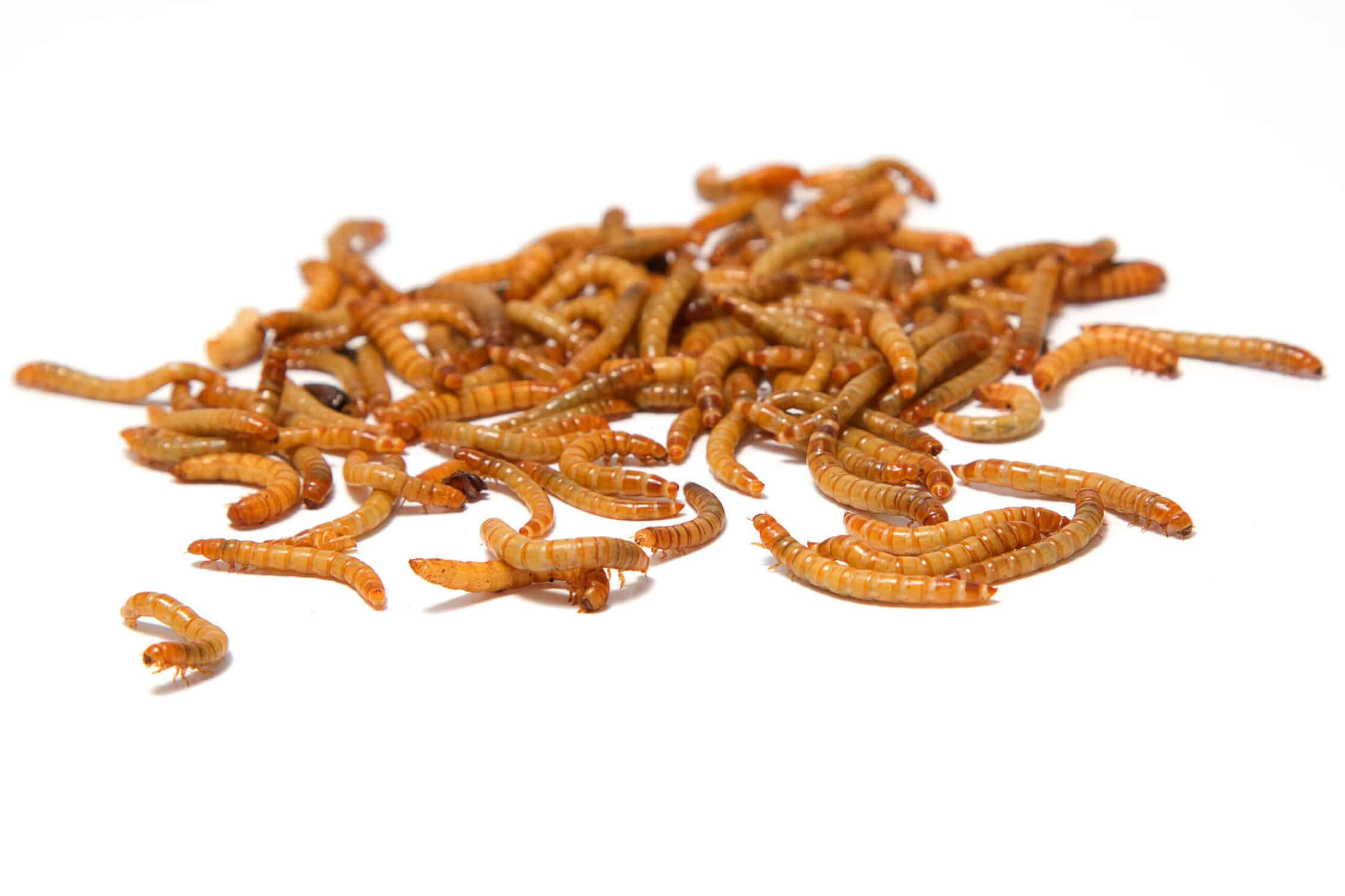mealworms on white background