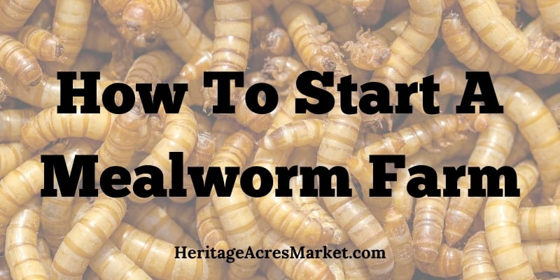 How To Start A Mealworm Farm A Comprehensive Guide For Beginners Heritage Acres Market Llc