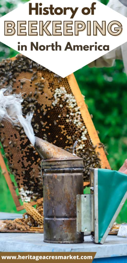 Bee smoker with Hive frame with comb and bees in background