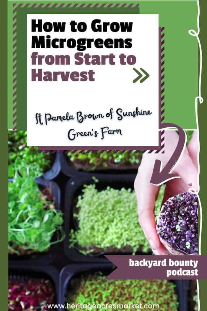 How to Grow Microgreens from Start to Harvest ft Pamela of Sunshine Green's Farm 1