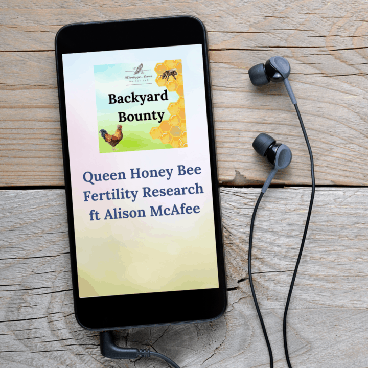 Queen Honey Bee Fertility Research ft Alison McAfee