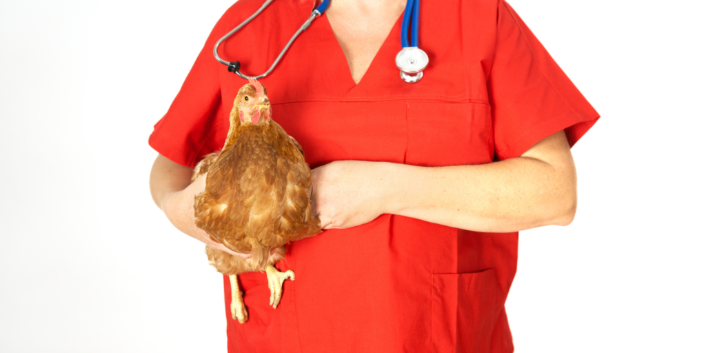 Sick Chicken Symptoms, Diseases & Treatments 50